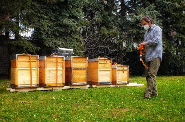 Dúbravka má svoje včely