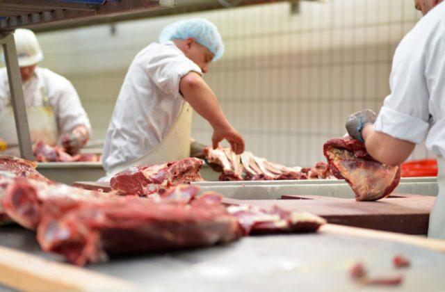 Britskí farmári likvidujú zdravé ošípané, vláda pod tlakom vydáva dočasné víza pre zahraničných mäsiarov