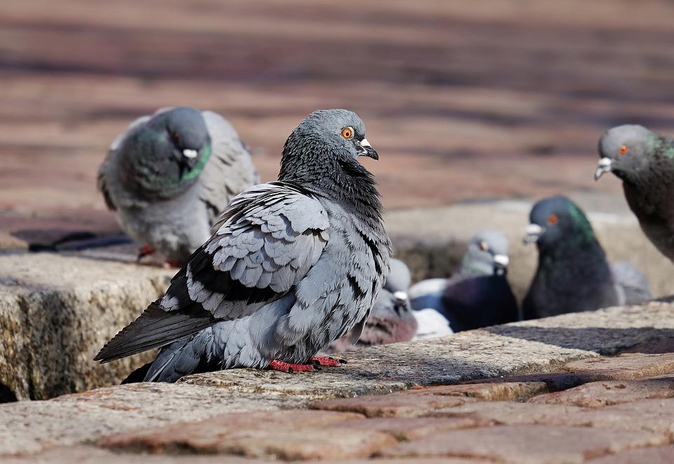 Dva holuby zrazili tretieho do koľajiska. Čo sa potom stalo, šokuje každého! (VIDEO)