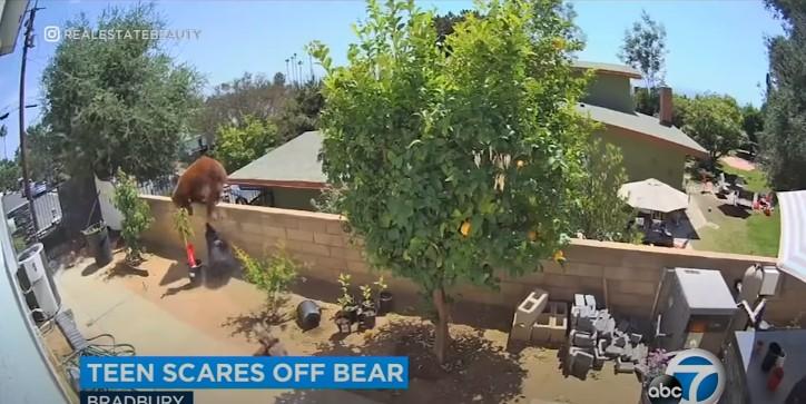 Neuveriteľné video. Žena bránila svoje psy pred medveďom holými rukami
